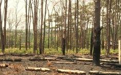 Khởi tố nguyên phó chủ tịch huyện vì để mất rừng