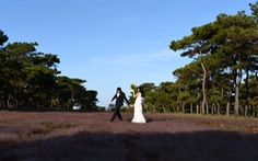 Chuyển mục đích gần 156ha rừng thông cổ thụ để làm sân golf Đak Đoa