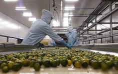 Chi phí logistics cao, nông sản Việt Nam khó cạnh tranh