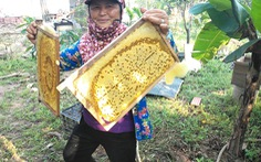 Mật ong Việt Nam gặp khó ở thị trường Mỹ