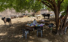 COVID-19 ở Ấn Độ: Người bệnh nằm dưới cây để chữa trị