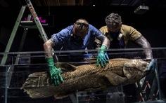 Phát hiện loài cá tưởng đã tuyệt chủng từ 65 triệu năm trước cùng khủng long