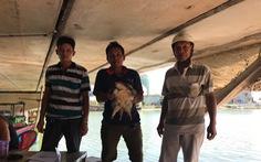 Làm chồ rớ trên đầm Thị Nại, ngư dân bất ngờ bắt được rùa cá sấu 'quê tận Bắc Mỹ'
