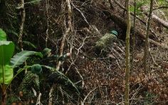 Chống dịch giữa rừng già biên viễn