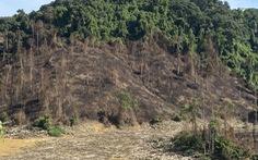 Đốt thực bì rừng phòng hộ trồng rừng thay thế gây cháy rừng?