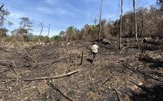 Chủ tịch Quảng Nam yêu cầu làm rõ việc đốt thực bì gây cháy cây rừng