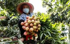 Phó thủ tướng yêu cầu tăng cường hỗ trợ, tiêu thụ nông sản cho Bắc Giang