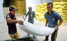 Gạo ST24, ST25 bị đăng ký nhãn hiệu ở Úc, Việt Nam triển khai biện pháp khẩn cấp