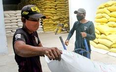 Gạo ST25 bị đăng ký nhãn hiệu ở Úc, thương vụ khẩn cấp vào cuộc