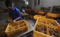 Trung Quốc ghi nhận ca nhiễm virus cúm gia cầm chủng H10N3 đầu tiên trên người