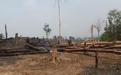 Hai đời trưởng ban làm mất hơn 424 hecta rừng phòng hộ