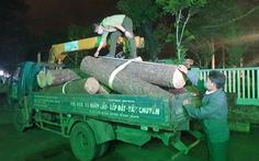 Bắt 'lâm tặc' đốn hạ thông cổ thụ trong khu du lịch quốc gia hồ Tuyền Lâm