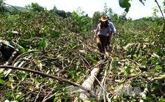 Tái điều tra vụ án 'tham ô' liên quan cựu phó giám đốc Ban quản lý rừng phòng hộ Sông Hinh