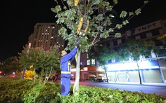 Hà Nội bứng dời hàng phong lá đỏ trong đêm