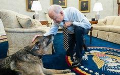 Vợ chồng Tổng thống Biden chia tay cún cưng sau 13 năm chung sống