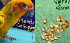 Thái Lan: Vẹt mở trộm hộp trang sức 'chén' sạch 21 viên kim cương của chủ nhân