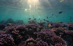 Đảo Bali dời lại kế hoạch mở cửa du lịch