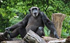 Vườn thú Sri Lanka được yên tĩnh, nhiều động vật có thai lần đầu