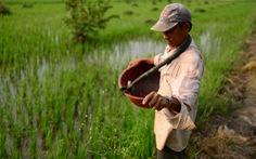 Không thể dừng xuất khẩu phân bón bất chấp giá trong nước đang tăng cao