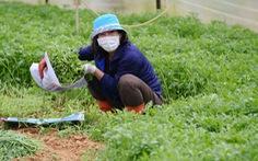 Người Đà Lạt hào phóng, tặng Sài Gòn nguyên vườn rau