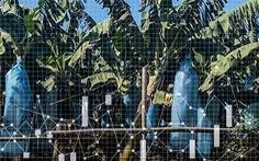 Doanh nghiệp Trung Quốc thâu tóm hàng triệu hecta đất tại châu Phi, châu Á