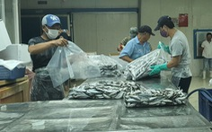 Người Đà Nẵng gửi 7 tấn cá tươi tiếp sức Sài Gòn chống dịch