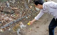 Vũng Tàu tiếp tế trái cây cho khỉ để dụ chúng về lại núi