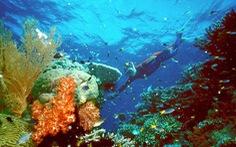 Trung Quốc phủ nhận gây ảnh hưởng đưa rạn san hô Great Barrier vào danh sách nguy cấp