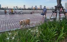 Đà Nẵng lập các tổ, đội bắt giữ chó thả rông nơi công cộng