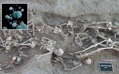 Tìm thấy chủng vi khuẩn 5.000 tuổi gây 'Cái chết đen' tại châu Âu