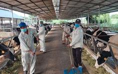 Hàng trăm tấn sữa có nguy cơ đổ bỏ