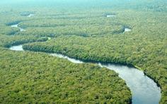 Công viên Salonga ra khỏi danh sách di sản thế giới bị đe dọa của UNESCO