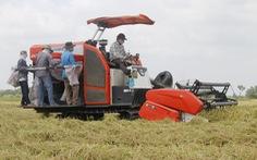 Lúa miền Tây đầy đồng nhưng vắng người mua, Bộ trưởng Lê Minh Hoan đề xuất lên Chính phủ