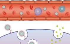 Phương pháp đưa thuốc tới từng tế bào mang bệnh