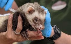 Vườn thú Mỹ tiêm vaccine ngừa COVID-19 cho vật nuôi