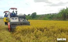 Ngân hàng phải cung ứng đủ vốn cho thu mua thóc, gạo ở miền Tây