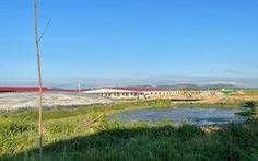 Di dời hơn 1.600 con heo khỏi trại bò gây ô nhiễm khiến người dân bức xúc