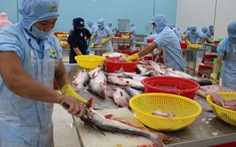 Hơn 70% nhà máy đóng cửa, ngành thủy sản khẩn thiết đề nghị tiêm vắc xin cho công nhân
