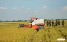 ĐBSCL còn 690.000 ha lúa hè thu chưa thu hoạch