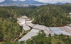 Lâm Đồng tháo dỡ 220ha nhà kính, nhà lưới lấn rừng, hoàn thành trong tháng 9-2021