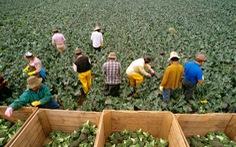 Australia triển khai thị thực lao động nông nghiệp mới vào tháng 9/2021