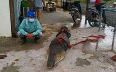 5 người Trung Quốc đối mặt án tù vì làm thịt cá sấu hoang dã