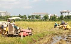 Bạc Liêu thành lập tổ điều phối, tiêu thụ nông sản, Cà Mau thu hoạch lúa trong đêm