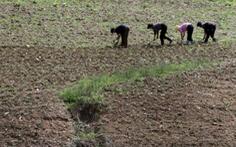 Tình báo Hàn Quốc nói Triều Tiên xả gạo dự trữ vì mất mùa