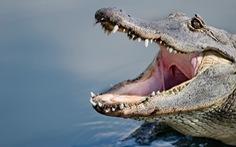 Cá sấu xuất hiện ở khu dân cư sau bão Ida, tấn công một cụ ông