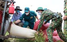 Bộ đội vác lúa, hội nông dân đi mua phân bón giúp dân TP.HCM