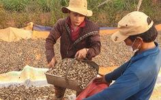 Hiệp hội Công nghiệp thực phẩm Mỹ đề nghị Việt Nam ưu tiên vắc xin ngừa COVID-19 cho ngành điều