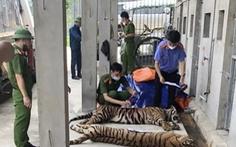 Vì sao 8/17 con hổ công an thu giữ từ nhà dân bị chết?
