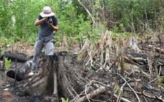 'Đốn rừng phòng hộ đầu nguồn để trồng keo': Nhiều cơ quan cùng vào hiện trường kiểm tra