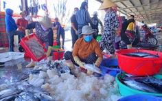 Từ 15-9, mở lại cảng Hòn Rớ, cảng cá lớn nhất Nam Trung Bộ